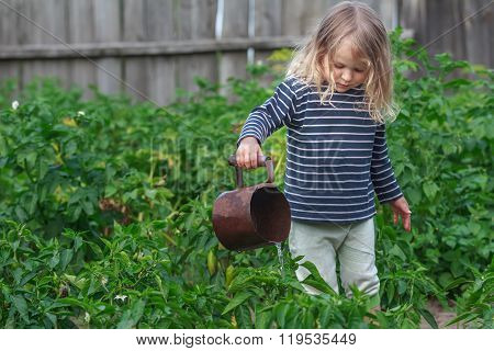 Three years old girl watering vegetable plants in green summer garden