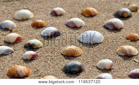 Several shells on the sand