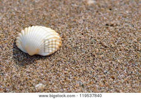 Single Shell on the beach