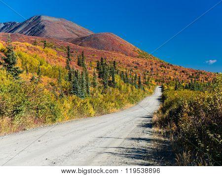 Denali Highway Fall Colors