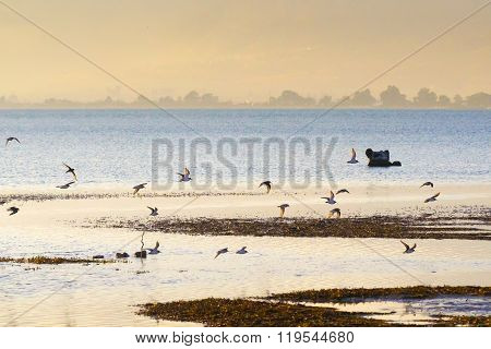 Landscape of a wetland at Nafplio in Greece with a flock of birds (Charadrius species)  flying.