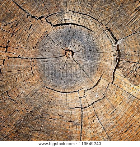 Texture Of The Oak Stump, Background Top View
