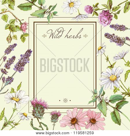 Wild flowers and herbs frame.