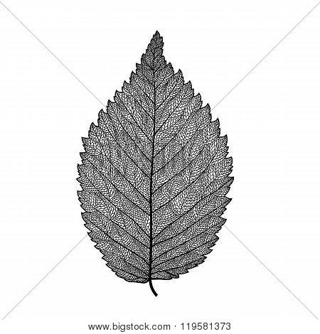 Vector Skeletonized Leaf