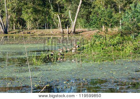Birds In Brazos Bend State Park Near Houston,  Texas