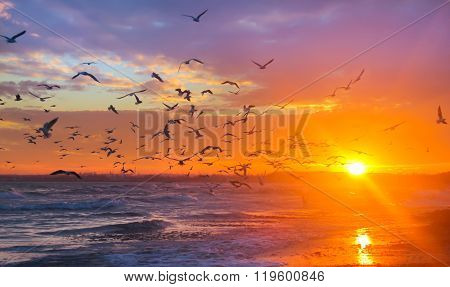 Birds Gulls In The Rays Of The Sun At Sunset On A Background Of Sky And Sea