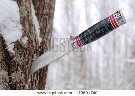 Old hunting knife stuck into a pine tree