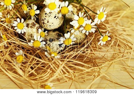 Quail Eggs In A Nest Of Straw