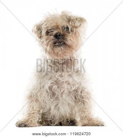 Old ugly crossbreed dog sitting in front of a white background