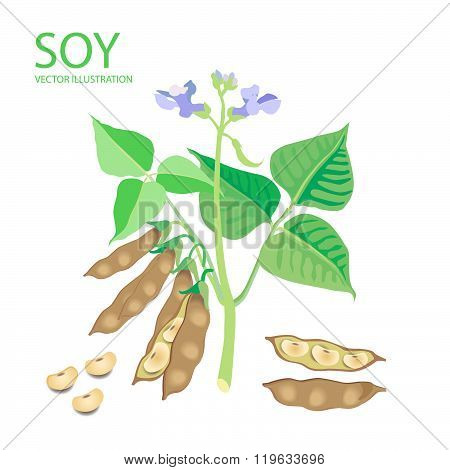 Soybeans. Vector Illustrations Set On A White Background. Soybeans Protein. Soybeans For Sale. Soybeans Estrogen. Soybeans Recipe. Soybeans Futures. Soybeans Plant. Complete Protein.