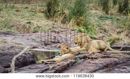 In Kruger National Park, South Africa