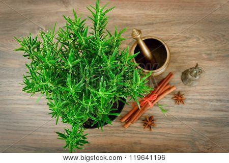 Fresh Tarragon Spice Isolated on Wood.