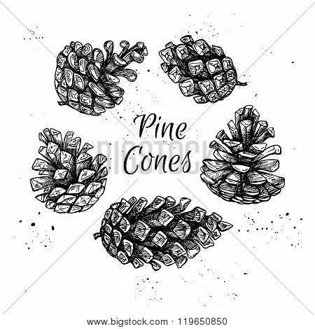 Hand Drawn Vector Illustrations. Collection Of Pine Cones. Forest Vintage Elements