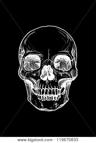 Human Skull With A Lower Jaw.