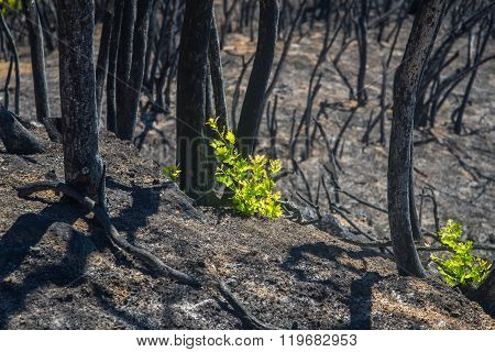New Growth in Wildfire Burn Scar