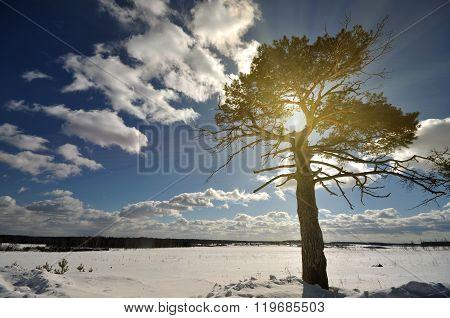Winter Tree On The Snow Field