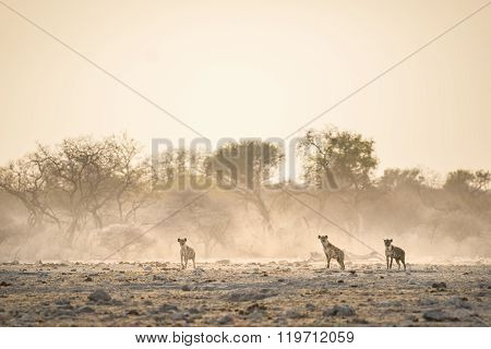 Hyenas stand in the dust of Etosha National Park