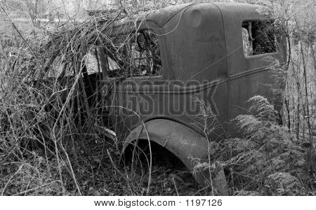 Antique Car Covered With Weeds