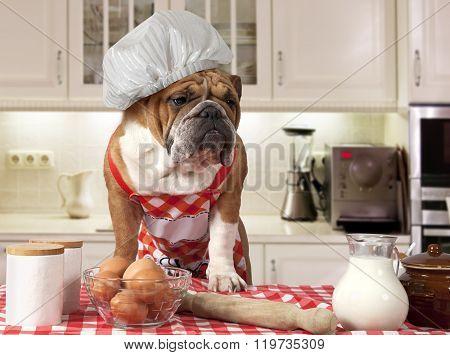 English Bulldog In The Kitchen