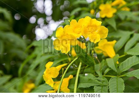 Beautiful Yellow Flower On Branch