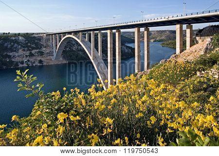 Krka bridge behind the broom flowers