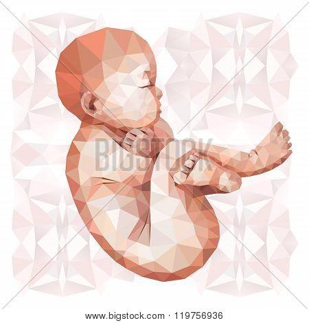 Low poly fetus
