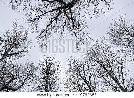 The Sky In The Winter Forest