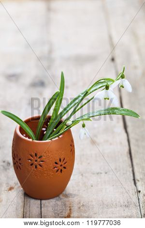 Bunch Of Snowdrop Flowers