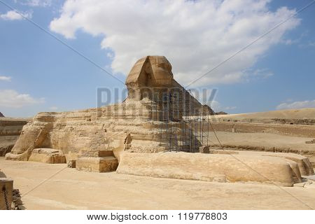 Sphinx On The Restoration. Giza Egypt.