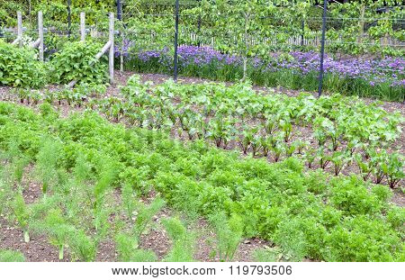 Vegetable community allotment in English rural village