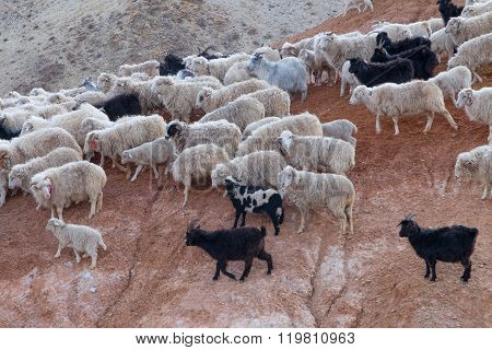 Flock of sheep on the hillside arming, farm,