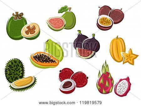 Tropical fresh fruits in cartoon style