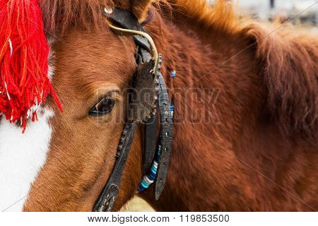 Harnessed Horse With A Red Head Decoration