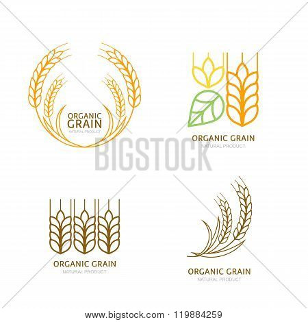 Set Of Organic Wheat Grain Outline Icons.