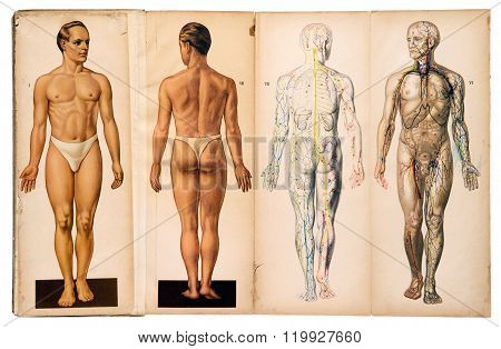 Old Vintage Male Medical Anatomy Charts