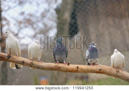 pigeon sit on a tree branch