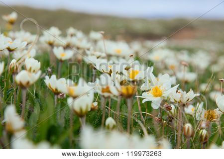 Beautiful flowers in the spring steppe plant, landscape,