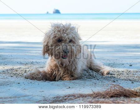 Dogs dig holes in the sand on the beach