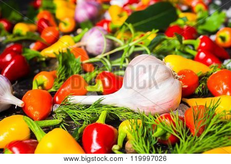 Setting Of Garlic, Yellow, Red Hot Chili Peppers, Sea Salt, Different Greenery And Black Peppers On