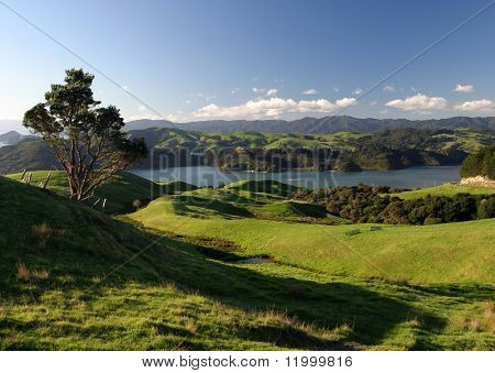 Rolling Green Pastures, New Zealand