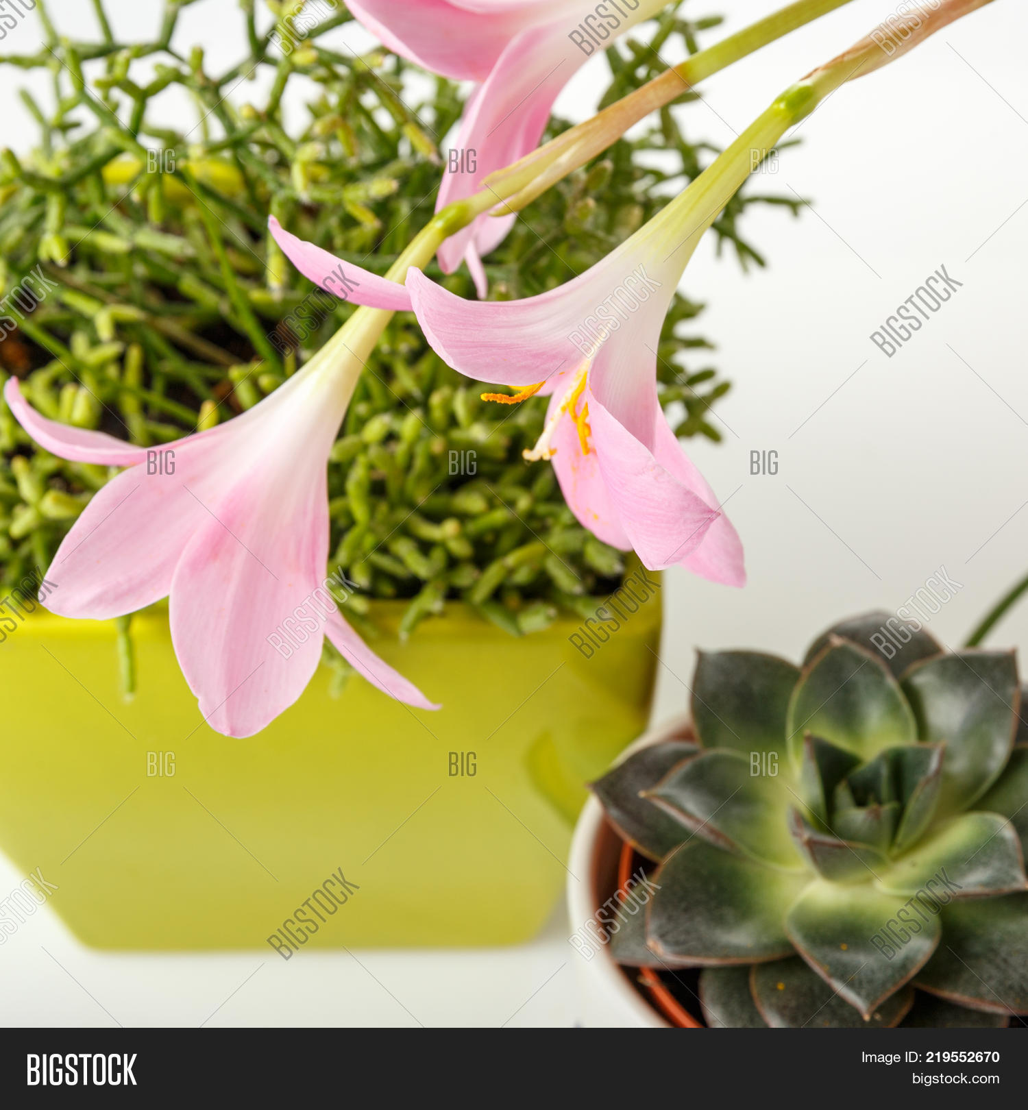 Succulent Plants Image Photo Free Trial Bigstock