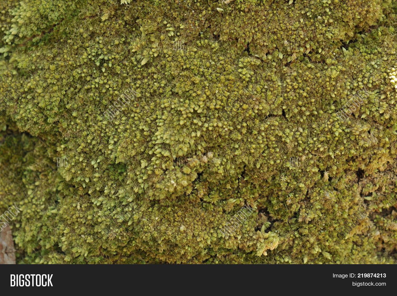 Moss Tropical Garden , Image & Photo (Free Trial)   Bigstock