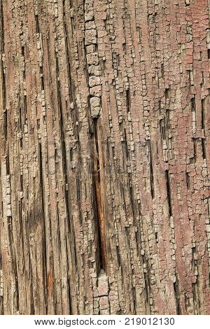 Ancient Wood Pillar Texture