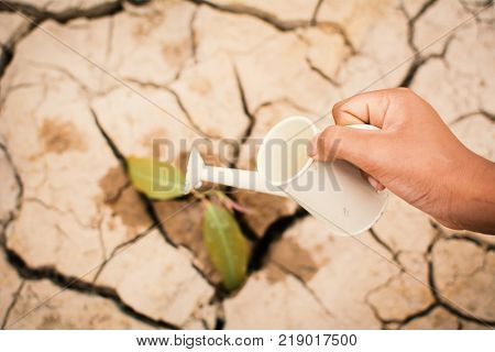 Hands of boy watering little green plant on crack dry ground concept drought and save the world