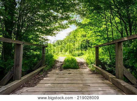 wooden bridge in green forest. lovely nature scenery in springtime.