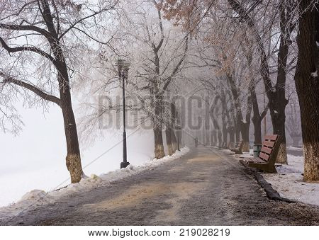 Longest linden alley in europe. Winter scenery on the river embankment at foggy sunrise in Uzhgorod Ukraine.