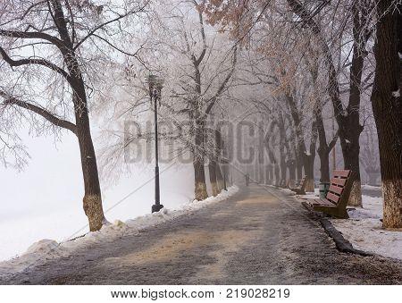 Longest linden alley in europe. Winter scenery on the river embankment at foggy sunrise in Uzhgorod Ukraine.