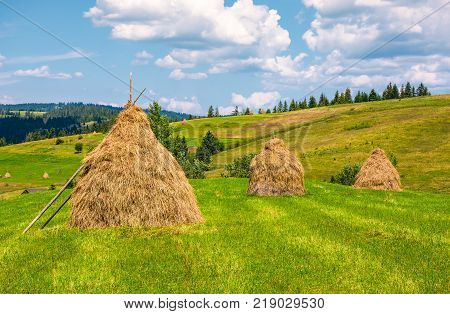 haystacks in a row on a grassy field. beautiful rural scenery in summer. ecologycal agriculture concept.