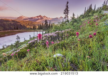 Early Sunset Over Alpine Meadow paintbrush and wildflowers