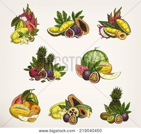 Set of isolated tropical fruit batches. Sketch of carambola and dragon or passion fruit, apricot and watermelon, melon and orange, kiwi and durian. Agriculture and nutrition, vegetarian food theme
